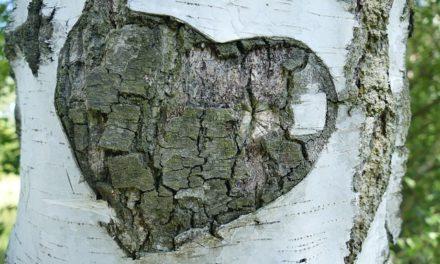 Del amor al maltrato en la pareja